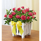 Charming Rose Garden Small - Plants by 1-800 Flowers