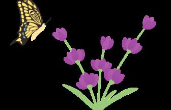 ラベンダーの検索結果 イラスト緑花ryokka