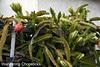 8.25 Dragon Fruit Blossom Abundance