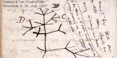 16,000 Pages of Charles Darwin's Writing on Evolution Now Digitized and Available Online