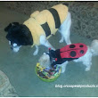 Dogs Dressed Up for Halloween in Cute Costumes