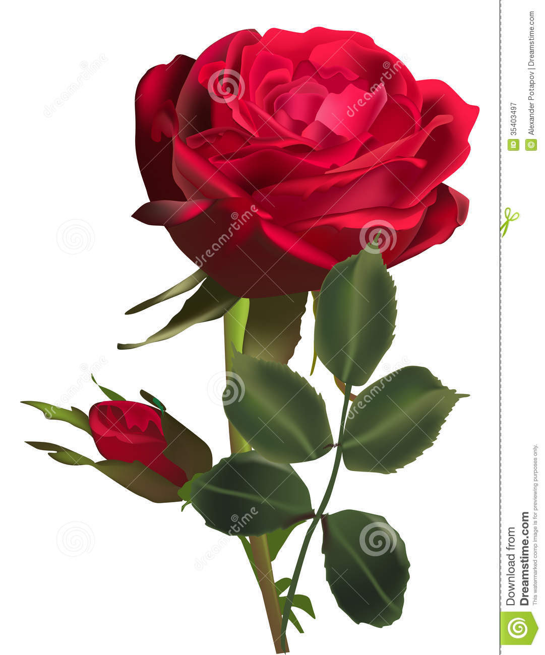 Gaeroladid White And Red Rose Images