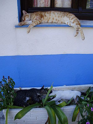 Sleeping cats in the town of Kokkari on the  is...