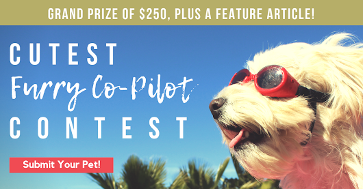 Can Your Pet Win Our Trucker Pet Photo Contest?