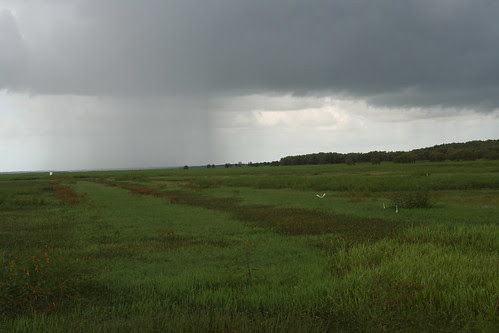 Rain over Adelaide River Plains
