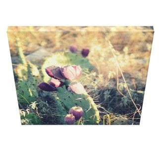 Pink Bloom Canvas Print
