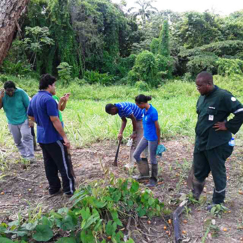 Trinidad and Tobago's Youth Apprenticeship Programme in Agriculture (YAPA).