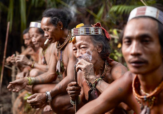 Indonesia Faces Human Rights Probe Over Treatment Of Forest Tribes | Dancing Turtle - Music // Films // News