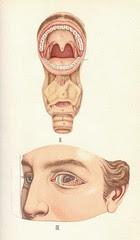 atlas anatomie 5