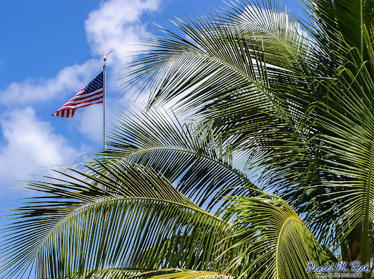 Old Glory and Palms