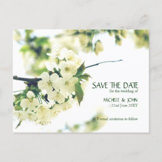 Save The Date White Cherry Blossom Postcard