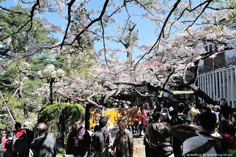阿里山櫻花季52