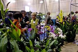 Orchid Vendors