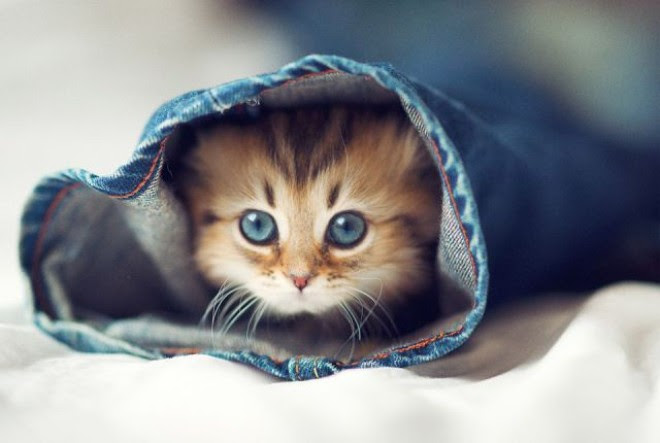 Kočičky  Království Kondomedie