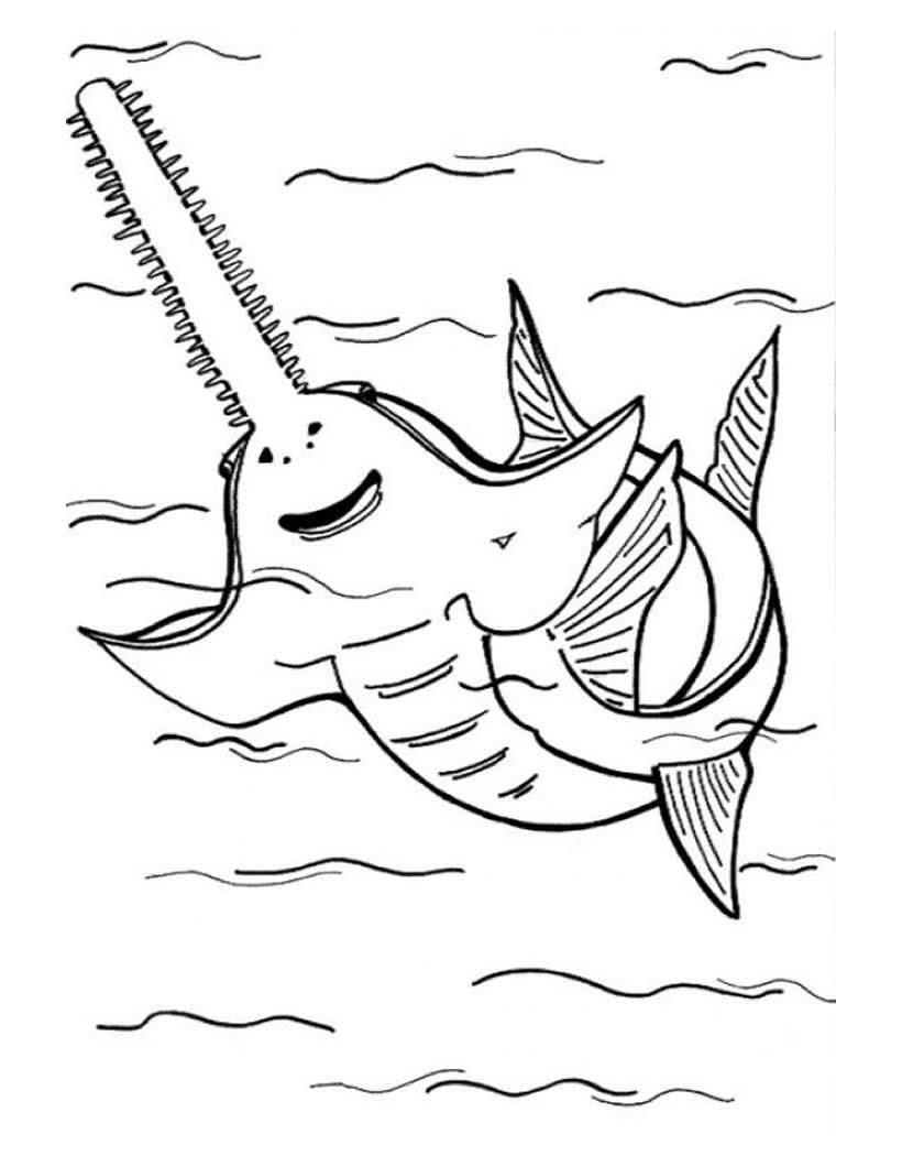 Dibujos Para Colorear Tiburon Cabeza De Martillo Eshellokidscom