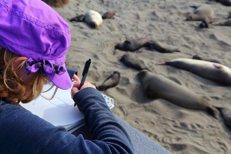 IMG_1351 Elephant Seal Drawing at Piedras Blancas