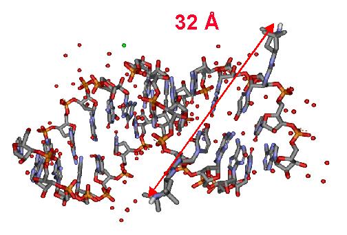 RNA - Differenza tra DNA e RNA