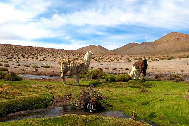 Atacama III