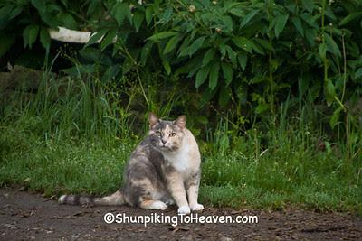 Story Cat, Indiana
