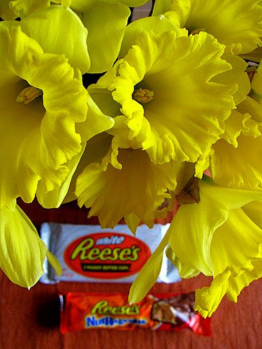 daffodils and reese´s