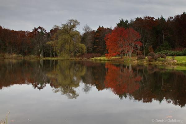 orange leaves, reflection