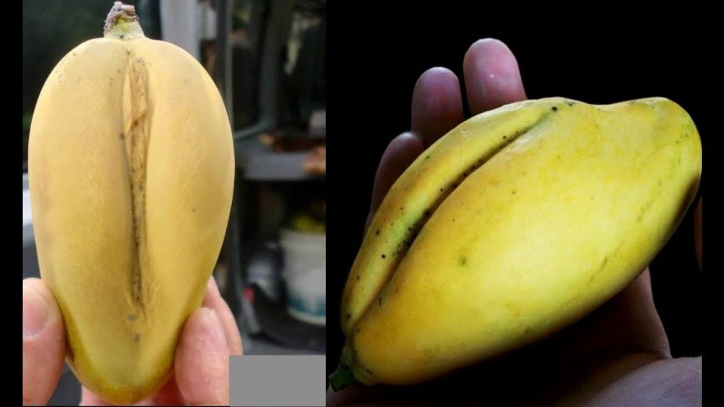 manga-buceta-mangarita