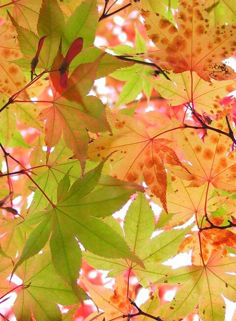 I have fluorescent lighting in my kitchen--I wonder if I scatter a few fake leaves in there, it'll look like this...