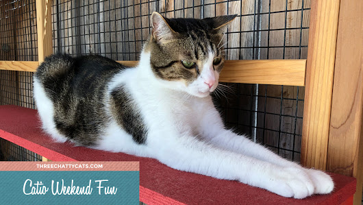 Catio Weekend Fun | Three Chatty Cats