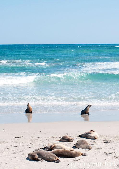 Swimming and sleeping sea lions at Seal Bay Conservation Park, Kangaroo Island