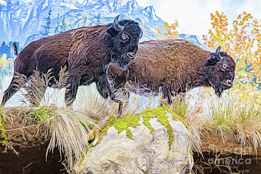 Bison Pair by Ray Shiu