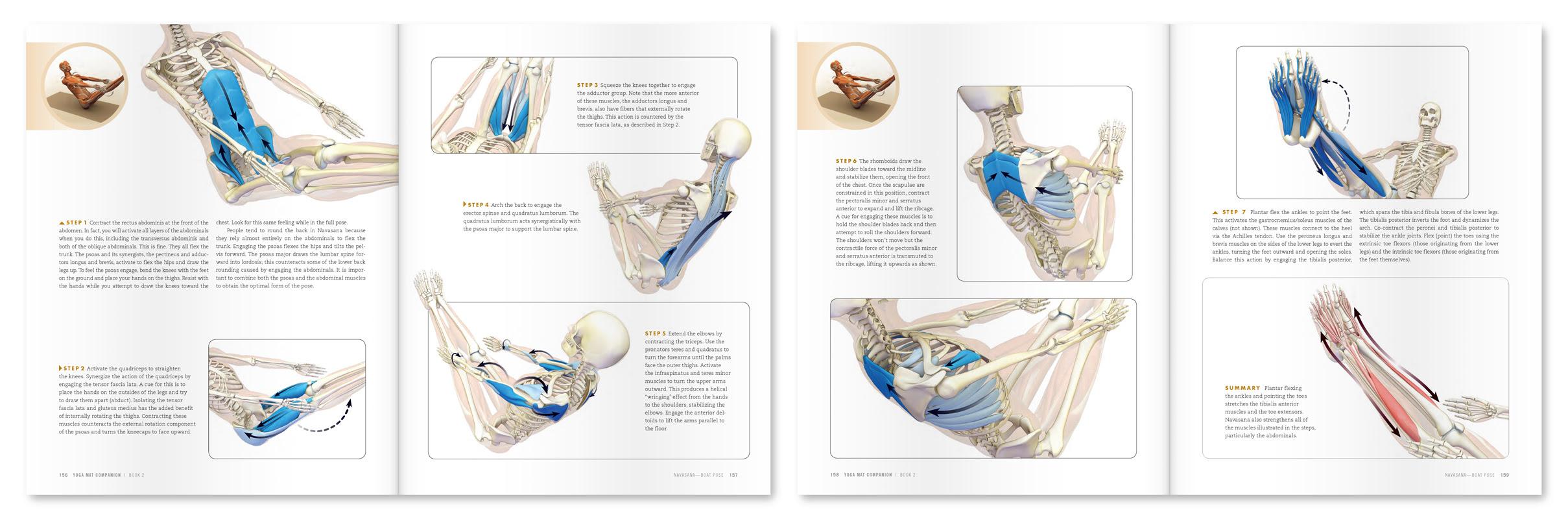 Navasana Anatomy