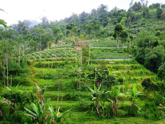 Agriculture or Forest? Studying Tree Cultivation in West Java, Indonesia