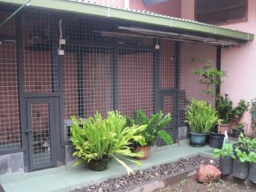 Desain Rumah Kucing Sederhana - Desain Rumah