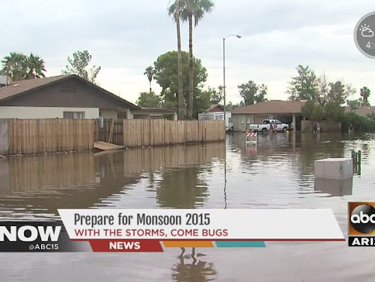 Year after record rainfall, Mesa homes fending off bugs