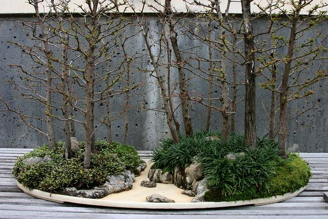 13_miniature_woods