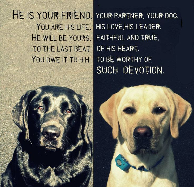 Quotes About Pet Dog 36 Quotes