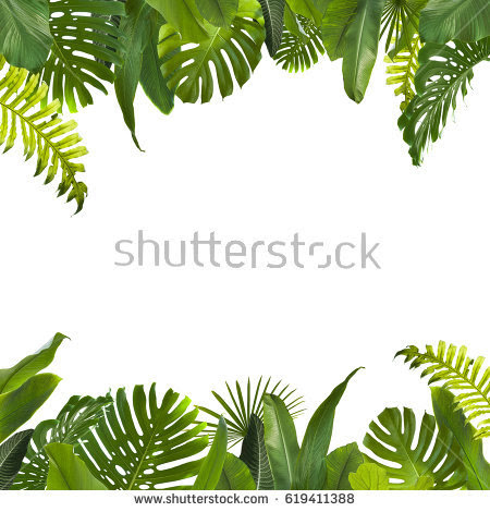 Download Png Leaves Tropical Png Gif Base Please to search on seekpng.com. download png leaves tropical png
