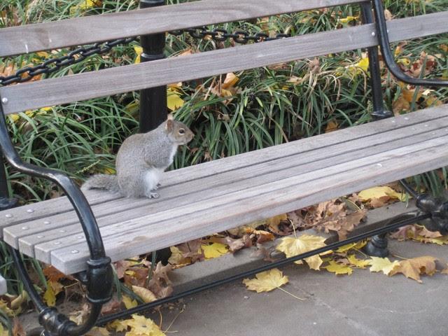 Greenwich Village Squirrel at Park