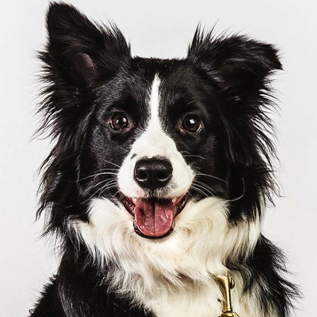 Retratos de cães cheios de personalidade 21