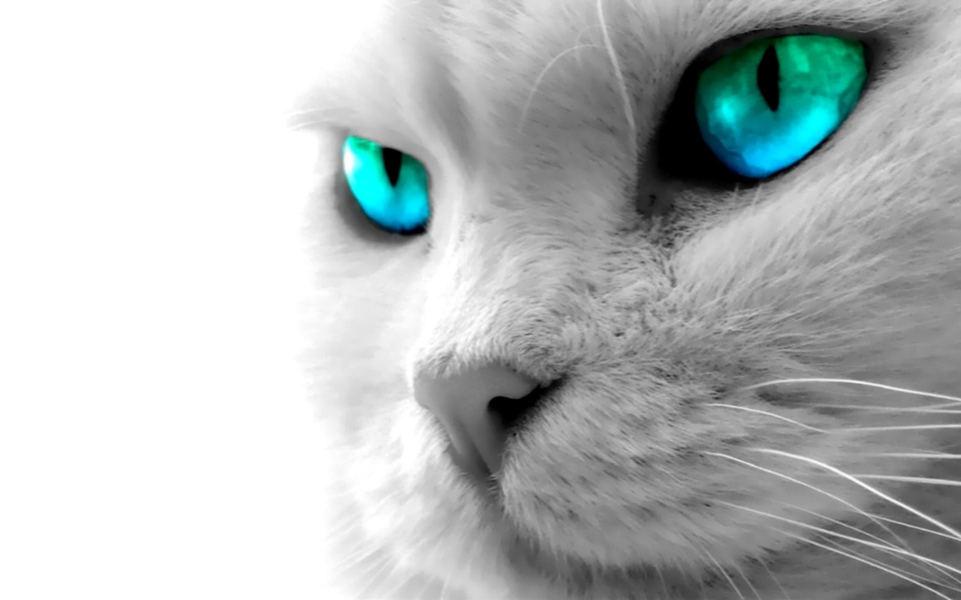 Desktop Wallpapers Cats 72 Background Pictures