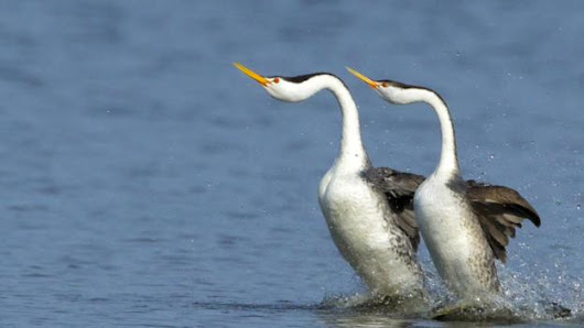 Steve Backshall's favourite dancing animals