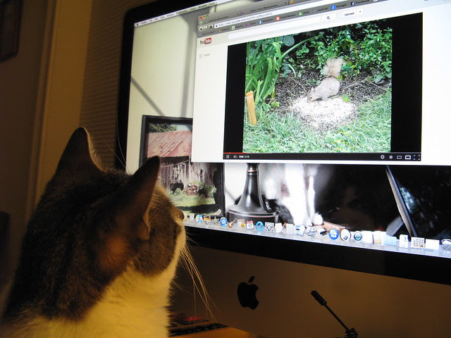 Penny watching a squirrel video