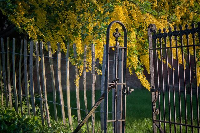Beyond the garden gate...