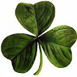 An Irish tune to start your St. Patrick's Day Celebration!
