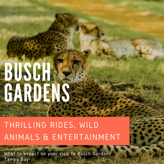 Wild Rides & Animals at Busch Gardens | Must Do Visitor Guides