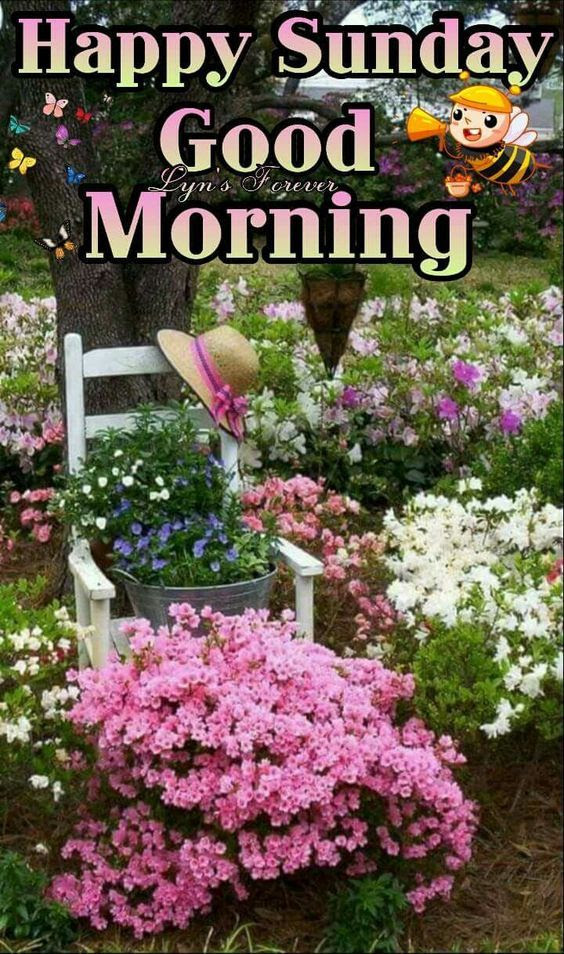 Garden Good Morning Happy Sunday Pictures Photos And Images For