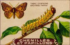 chenille 7