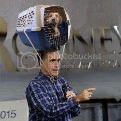 Romney with dog carrier on head