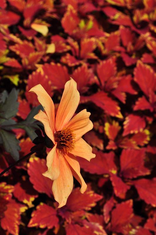 Flower Garden Walk (19)