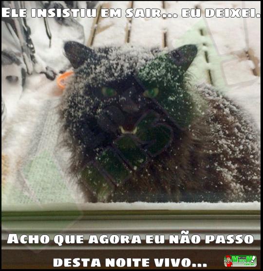 Blog Viiish - Quando você deixa seu gato na neve